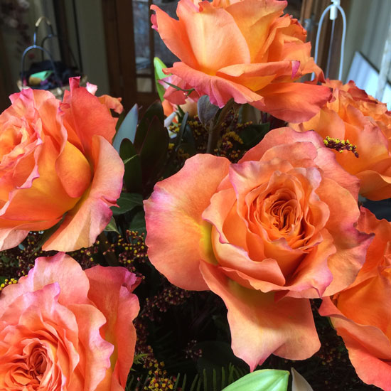 Welcom-Back-Roses
