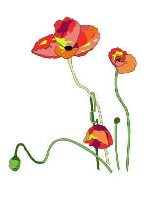 poppies1_042316